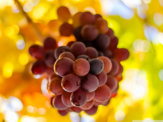 grapes_5-wallpaper-1152x864