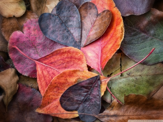 fall_in_love_4-wallpaper-1680x1260