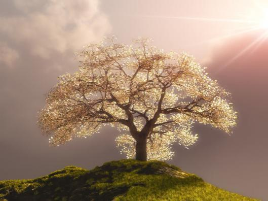 Lovely-lonely-tree-wallpaper_7885