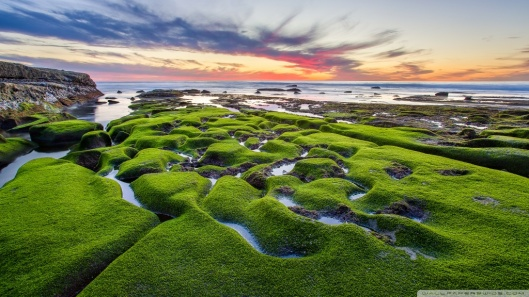 la_jolla_green_shore-wallpaper-1024x576