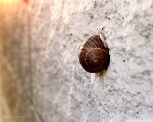 snail_on_wall-wallpaper-1280x1024