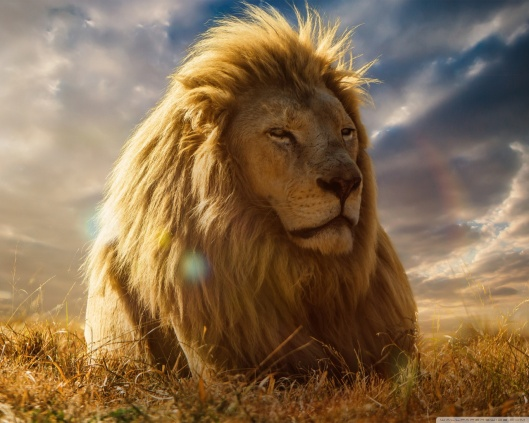 lion_king_3-wallpaper-1280x1024