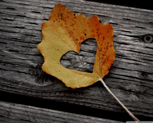 heart_leaf_autumn-wallpaper-1280x1024