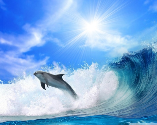 playing_dolphin-wallpaper-1280x1024