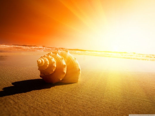 shell_on_the_beach-wallpaper-1280x960