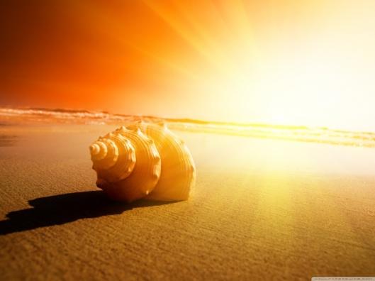 shell_on_the_beach-wallpaper-1280x960