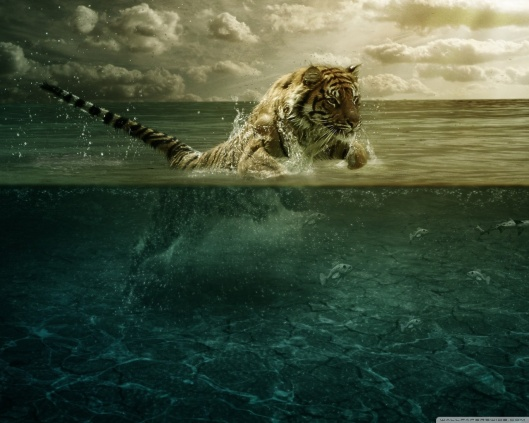 tiger_playing_in_water-wallpaper-1280x1024
