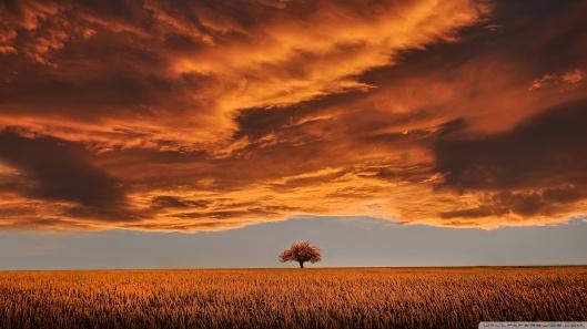 orange_landscape-wallpaper-1920x1080