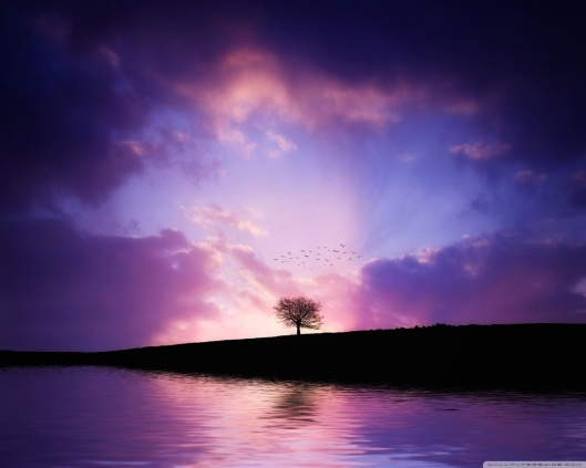 tree_sunset-wallpaper-1280x1024