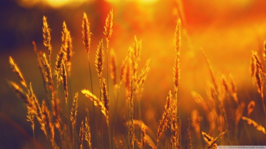 golden_sunlight_2-wallpaper-1920x1080