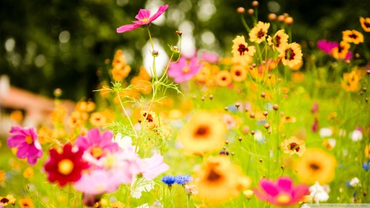 flowers_soustons_france-wallpaper-1920x1080