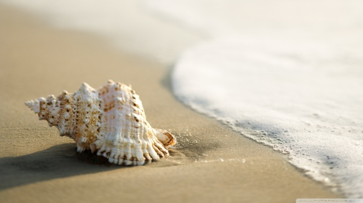 whelk_shell_3-wallpaper-1920x1080