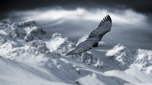 bald_eagle_flying_over_mountains-wallpaper-1920x1080