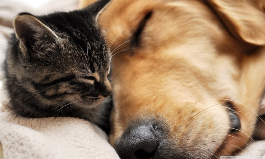 cat_and_dog_friendship-wallpaper-1280x768