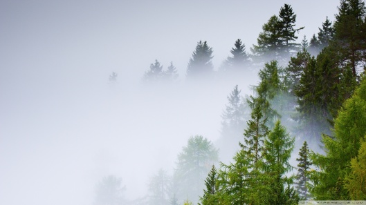conifer_forest_mist_rainy_day-wallpaper-1920x1080