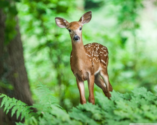 deer_woods-wallpaper-1280x1024