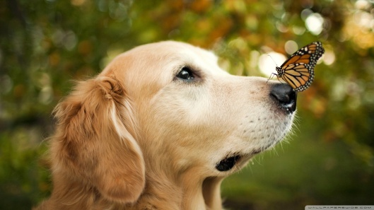 a_dog_and_a_butterfly-wallpaper-1920x1080